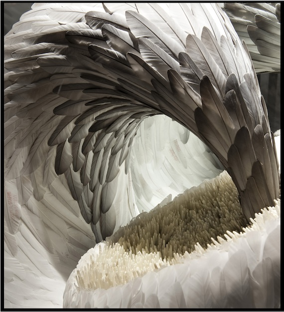 Quell, detail, mixed media with dove and pigeon feathers, Kate McGwire, 2011, Photo: Tessa Angus.
