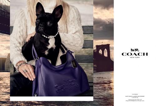Coach Pups Campaign